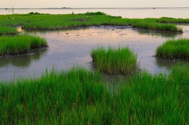 wetlands_066.jpg
