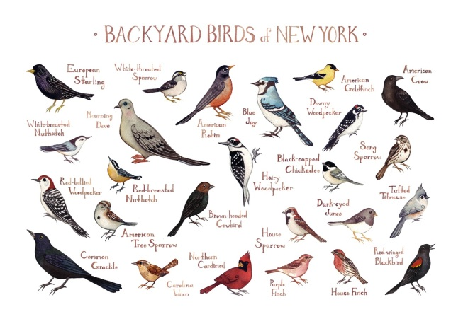 Backyard Birds of NewYork by Kate Dolamore